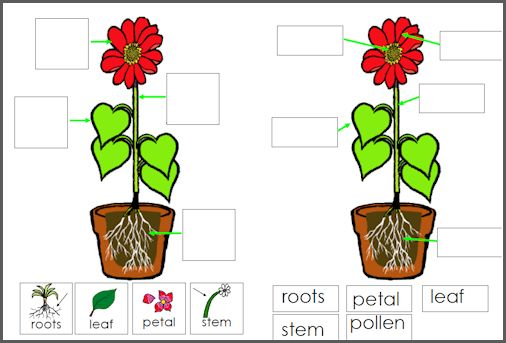 Parts Of A Flower Worksheet For Preschool parts of a plant worksheet ...