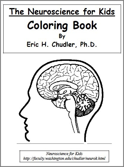 anatomy coloring book answers com anatomy coloring book kaplan   Chapter 1 The Human Body An Orientation Coloring Workbook Answers