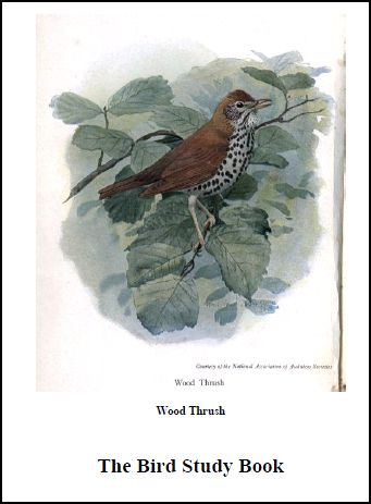 Chsh Teach Ornithology Study Of Birds Resources And